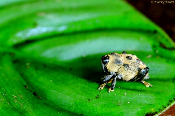 A little weevil in a big, big world