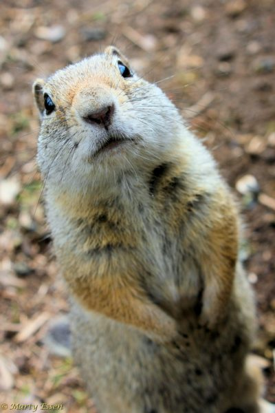 Got any nuts?