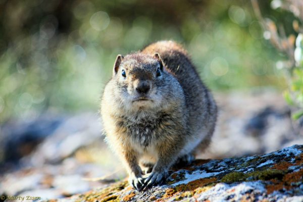 The many moods of ground squirrels