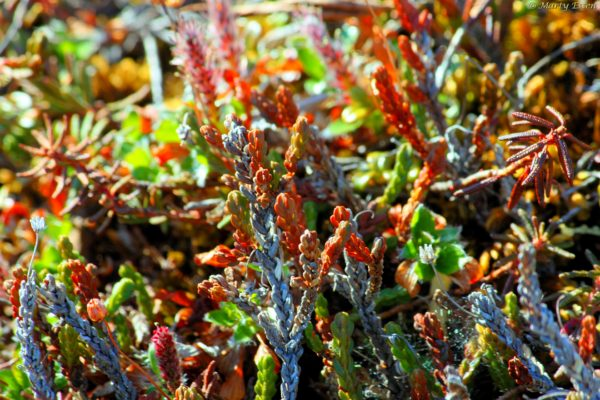 Tiny tundra plants