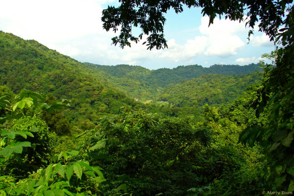 Puerto Rican forest
