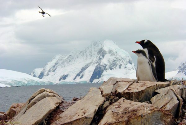Antarctica scenic with photobomb