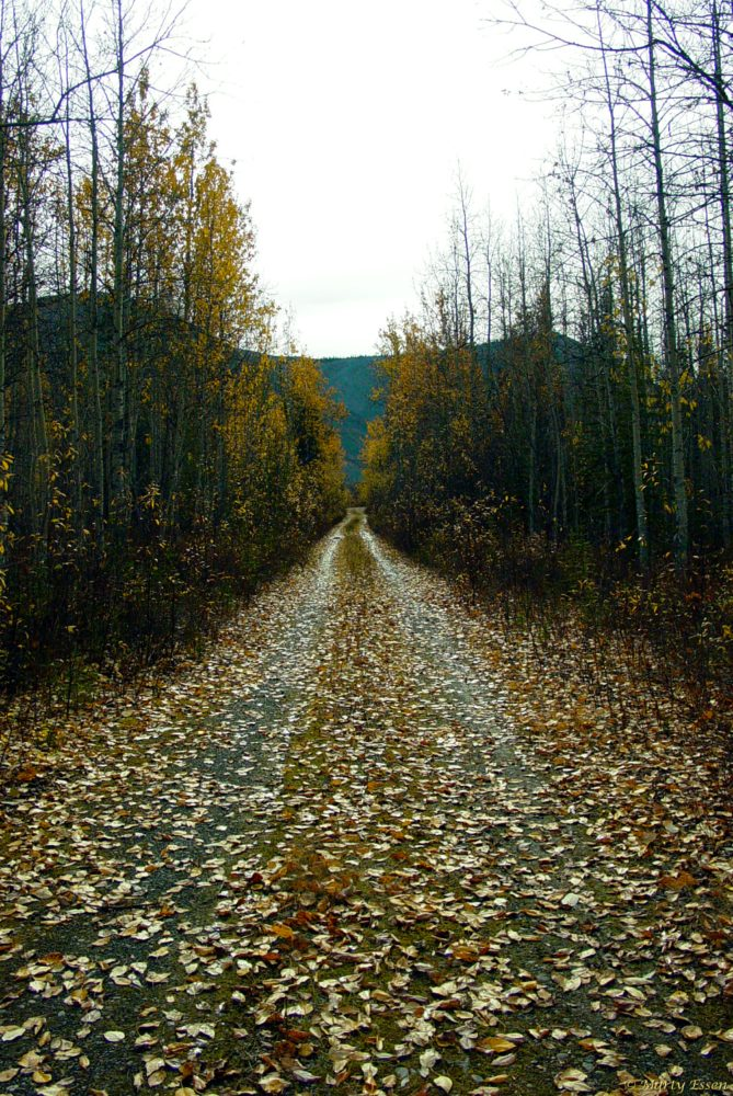 Fall in the Yukon