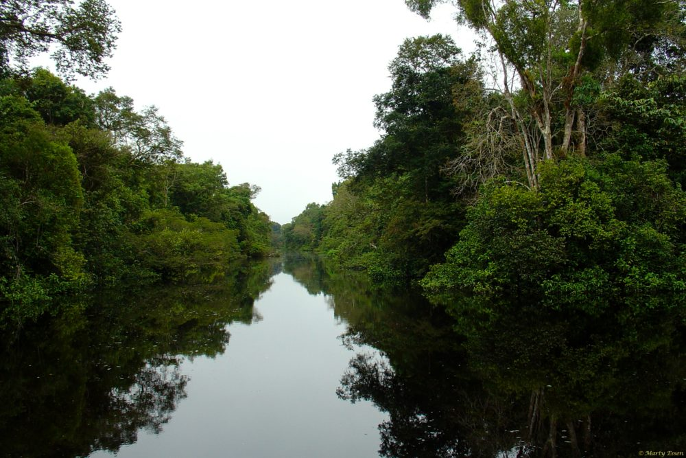 Kayaking the Amazon Rainforest