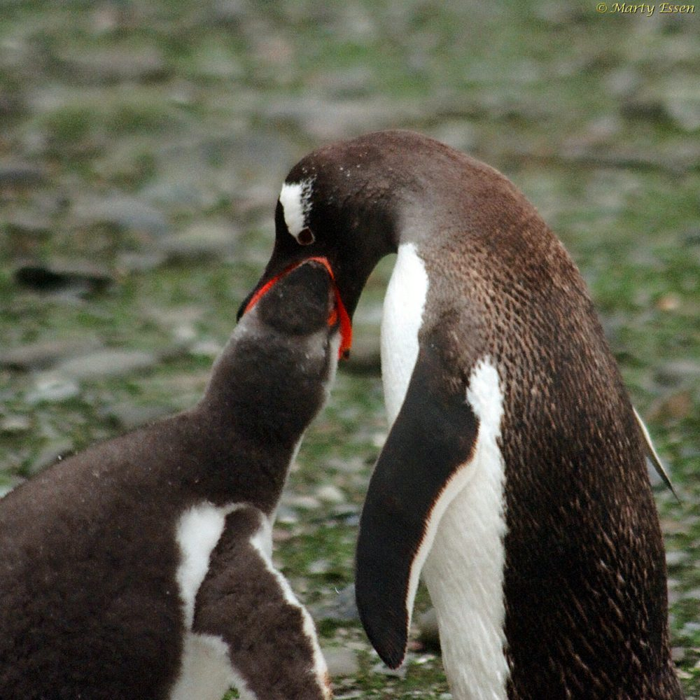 Penguins say Happy Father's Day, Mother's Day, and LGBTQ Pride Month