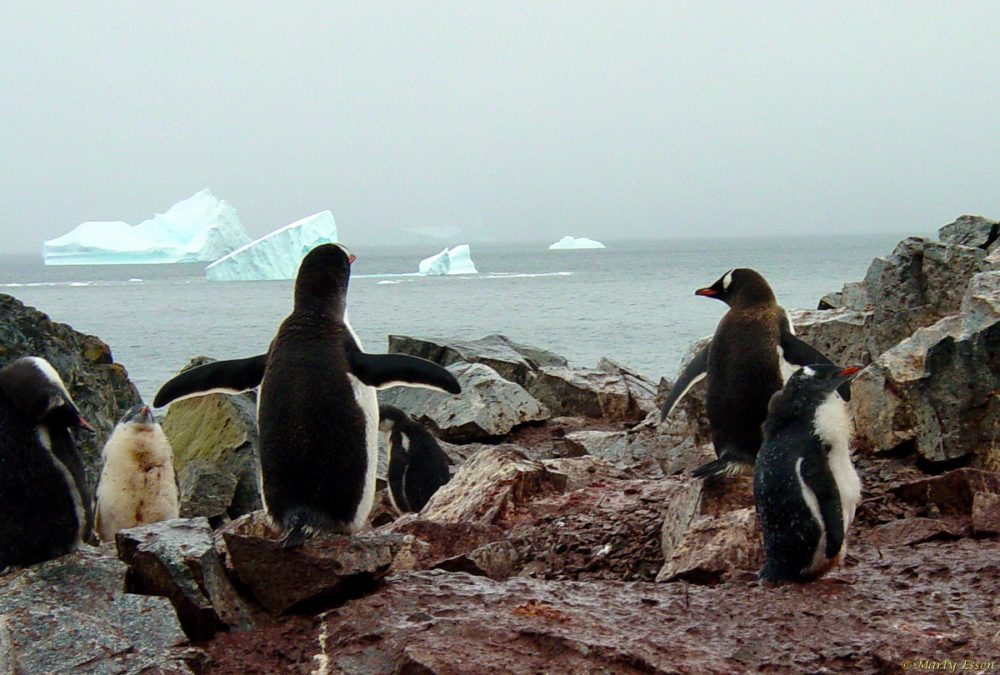 Meanwhile in Antarctica . . . .