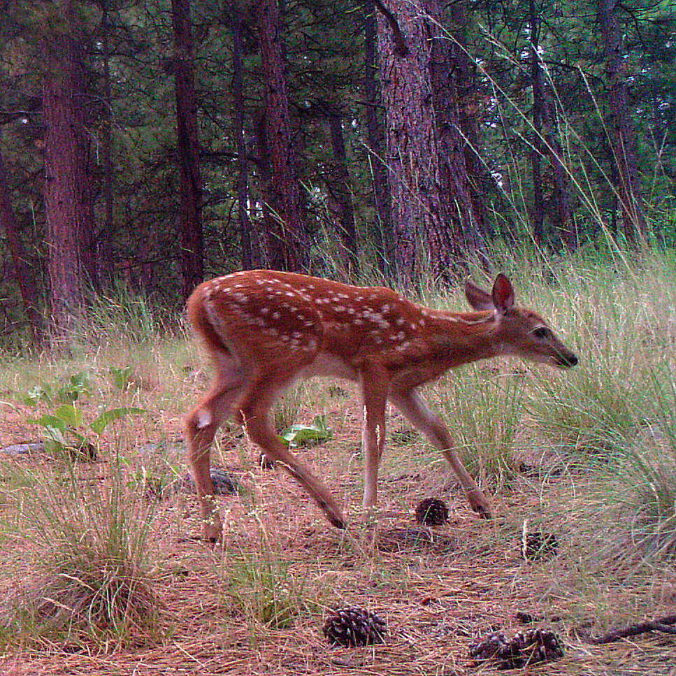 Trail-Camera shots #1
