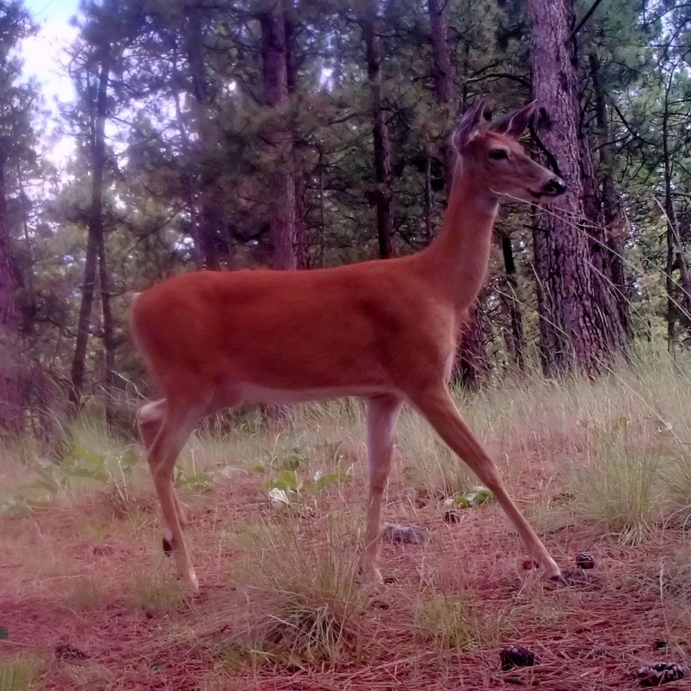 Trail-Camera shots #2
