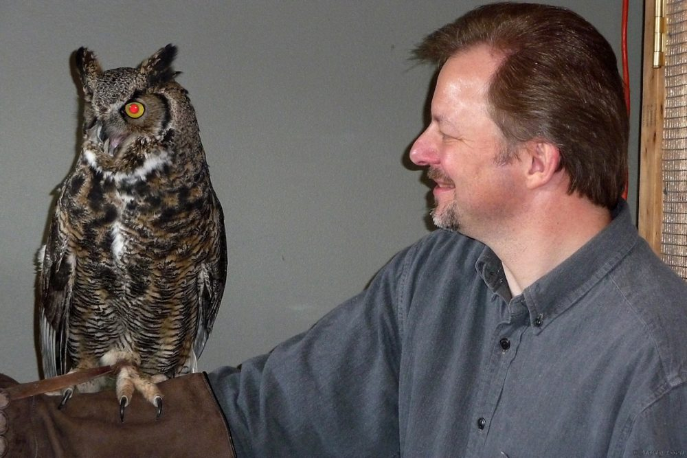 Holding a great horned owl