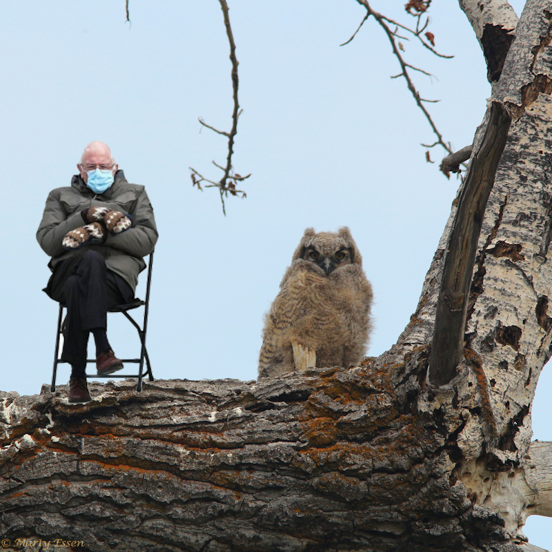 The old uncle owl-sitter