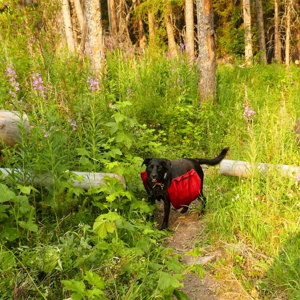 Nellie's first backpacking trip