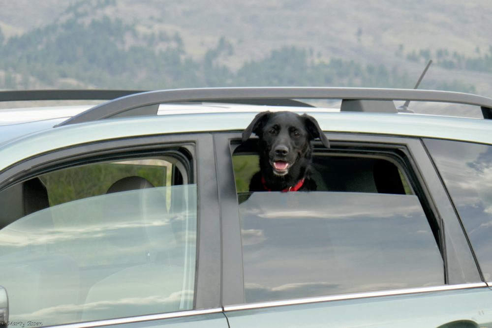 Dogs make the trip!